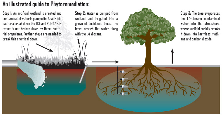Constructed wetlands duplicating the processes occurring in natural wetlands constructed wetlands are complex integrated systems in which water plants animals ccuart Image collections