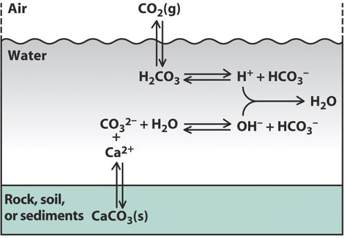 Can Anyone Explain The Carbon    Cycle    In An Aquarium