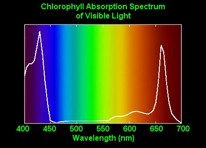 Specialized Cells Called Cone Each Type Of Cell Is Sensitive To A Range Frequencies Below Right Graph The Wavelengths Light